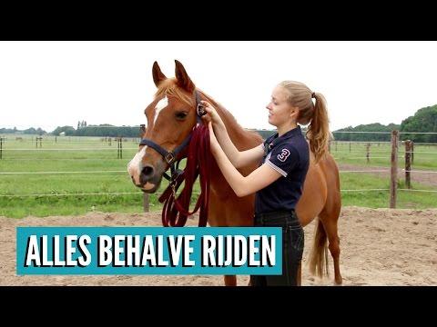 Wat kan je met je paard doen zonder te gaan rijden?