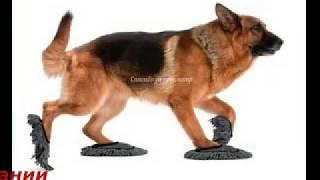 Обувь для собак москва