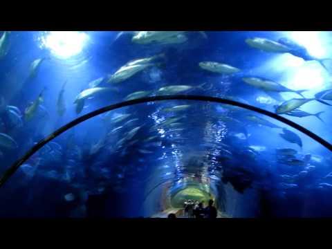 Oceanografic Valencia Oceanarium Aquarium Marine Park Acquario