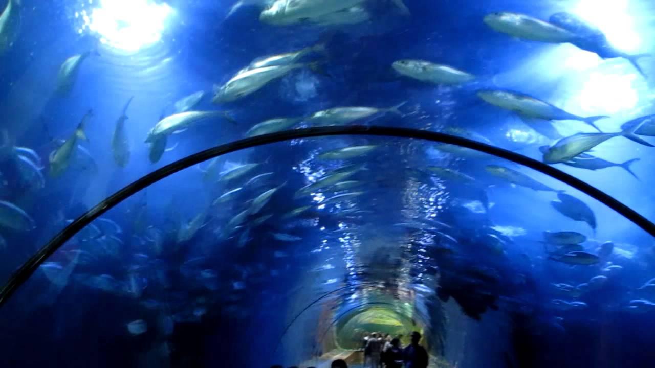 Oceanografic Valencia Oceanarium Aquarium Marine Park Acquario ...