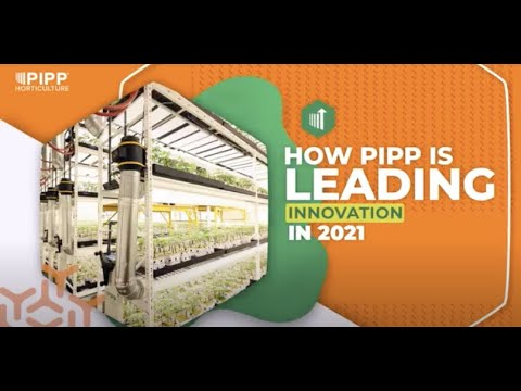 How Pipp Horticulture Is Leading Vertical Farming Innovation In 2021 ⬆️