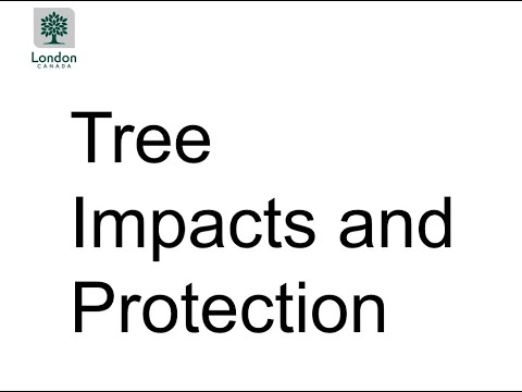 Project Update Meeting - Presentation Four: Information about Tree Impacts and Protection