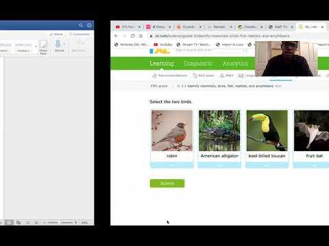 Identify Mammals, Birds, Fish, Reptiles, And Amphibians