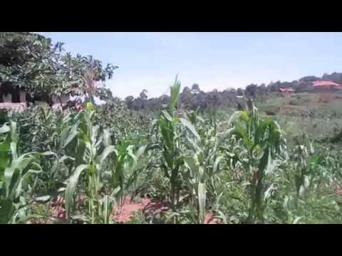 Kigo Quarter Acre for Sale 80m