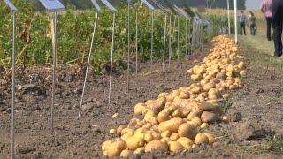 XXII Krajowe Dni Ziemniaka
