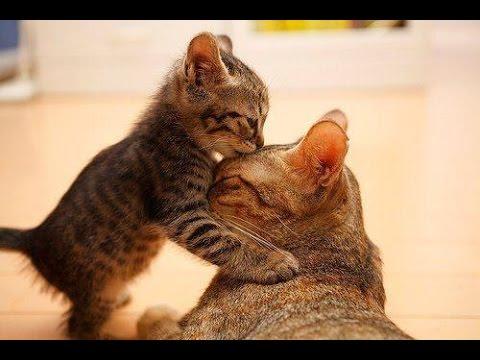 Kisah Anak Kucing Dan Ibunya Yang Mebuat Justin Bieber