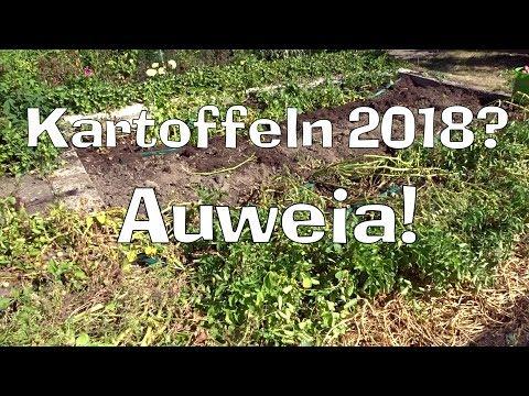 KARTOFFELN  2018? Auweia!  Film 65