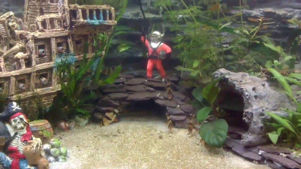 my 200l pirate wreck theme planted aquarium youtube