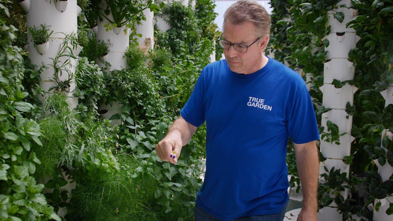 Do plants need soil to grow? | True Garden - YouTube