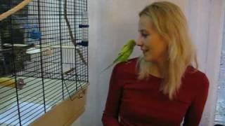 Волнистый попугай выполняет команды