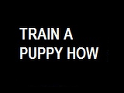 "*How Can  I  Teach  My  Puppy  To  Potty *|""How Can I Teach My Puppy To Potty""*Free-mini-Course*"