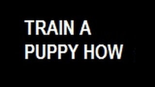 *How Can  I  Teach  My  Puppy  To  Potty * 