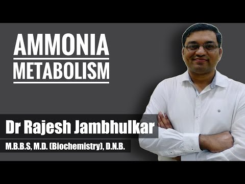 Ammonia Metabolism And Urea Cycle Part 1