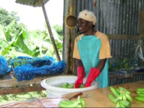 Banana growers story, Dominica