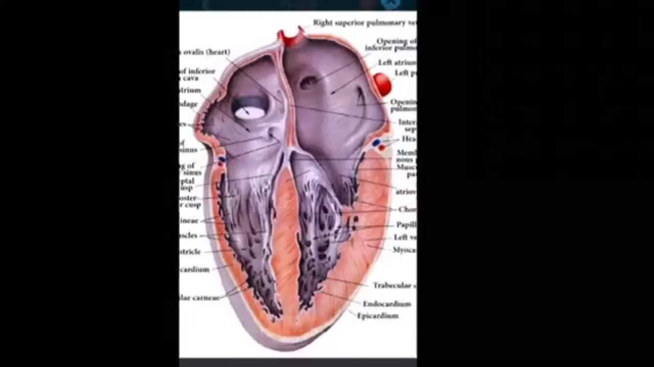 Human Anatomy 2014 Medical App For Iphone Youtube