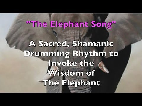 "Shamanic Drumming ""The Elephant Song"" West African Drumming Djembe Music"