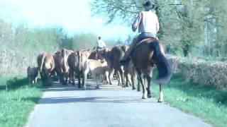 convoyage de bétail dans l'Allier