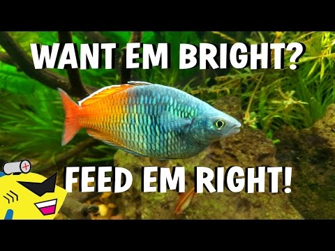TROPICAL FISH CARE - SECRET TO THE BEST COLORS (IT'S SIMPLE)
