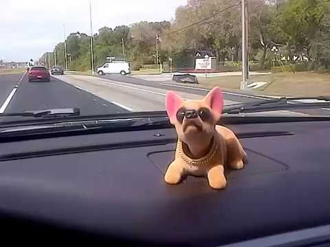 Chihuahua Bobble-Head Dash Rider