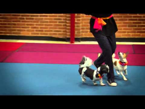 Energy Unleashed Freestyle - Canines Gone Dancing V Recital