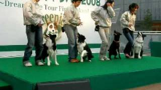 Dog Dance♪ グループダンス Ajile&Mile&葉月&青空.