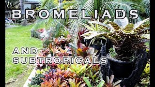 AN INSPIRATIONAL BROMELIAD AND SUBTROPICAL GARDEN