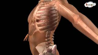 human body parts animation
