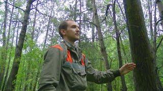 Кто следит за здоровьем деревьев? «Таёжный спецназ» 31.08.2020