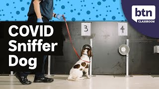 COVID Sniffer Dogs - Behind The News