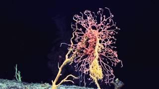 Видео неизвестных науке подводных существ.