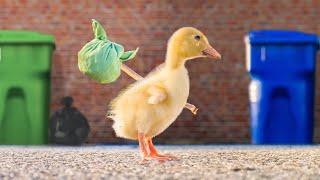 El pato fugitivo