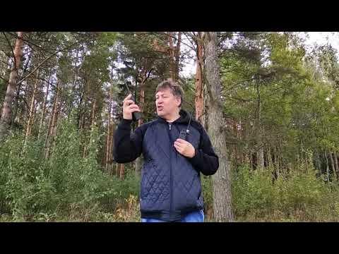 Тест работы в лесу Cb раций Alan 42, Штурман-80М и Штурман-882М