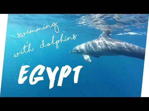 GoPro: Egypt - Swimming with Dolphins
