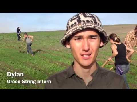 Dylan - Green String Intern from Hawaii