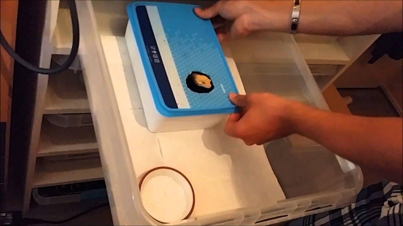 Modular Storage For Geckos Gecko Time Breeder Basics Reptile Rack