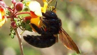 Простые уроки пчеловодства для начинающих