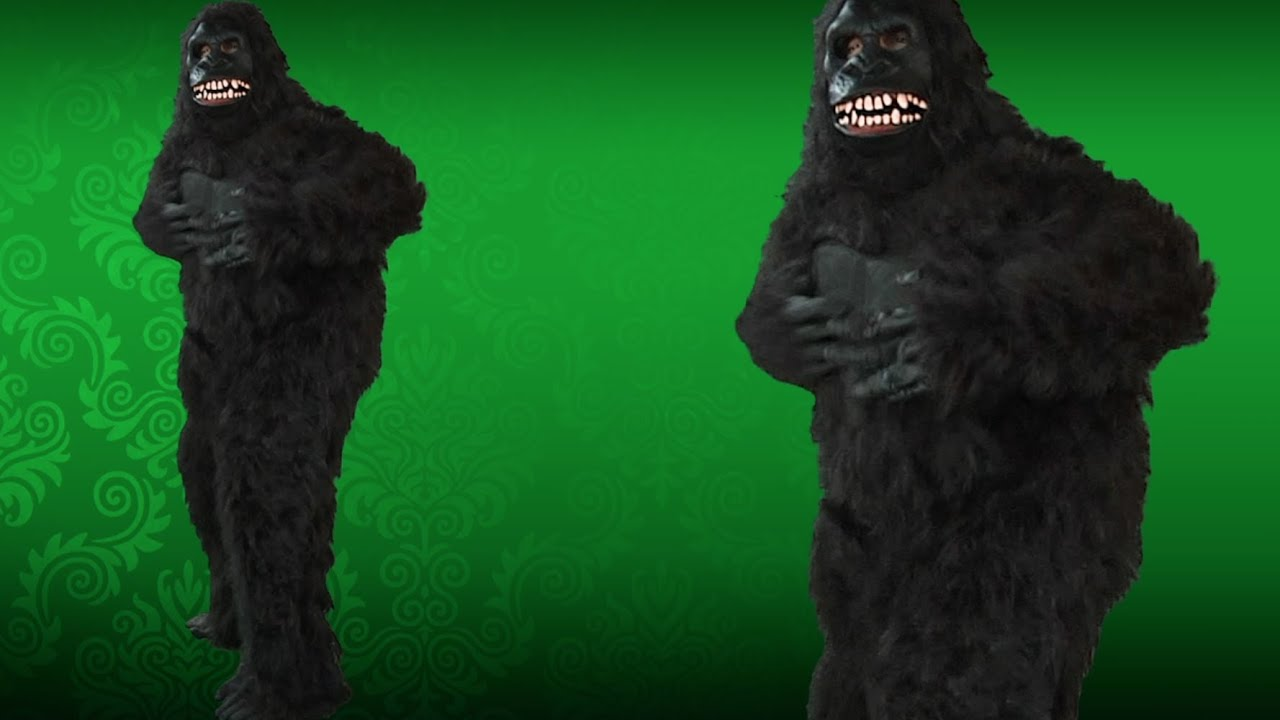 Uncategorized How To Make A Gorilla Costume going ape gorilla costume youtube