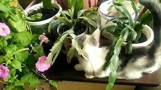 Котенок Зайка 😽