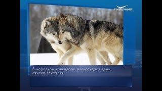 Волчьи свадьбы. Календарь губернии от 28 марта