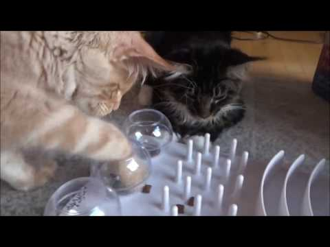Maine Coon Camillo & Gizmo: Trixie Funboard im Test