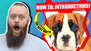How Do I Introduce My BOXER PUPPY To My Family