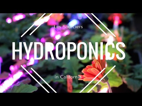 Taking a Hydroponic Course in UC Davis, California