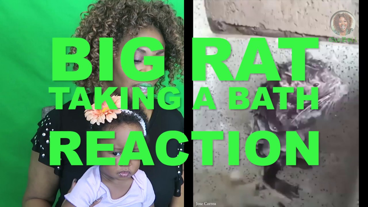Rat Taking a Bath Reaction - GloZell