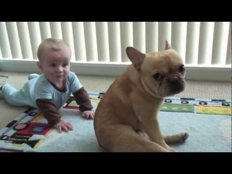 Charlie Bronson the French Bulldog and Baby