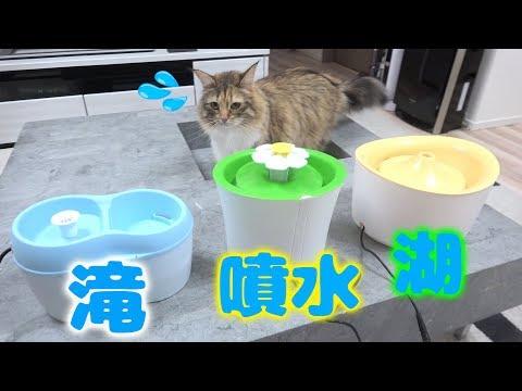 【ハプニング】どの水飲みが一番気に入ってくれる?