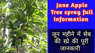 June-July Apple Tree Spray full Information#apple spray||जून महीने में सेब की स्प्रे की पूरी जानकारी