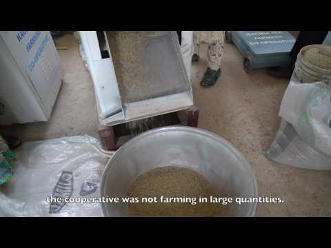 Kachia All Farmers Cooperative Society