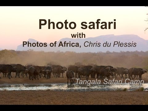 Tangala Safari Camp - South Africa Travel Channel 24