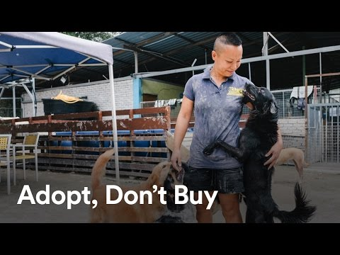 Adopt, Don't Buy with Shannon Lam | KL Pooch Rescue