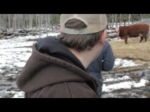 Brett Kissel Taggin' Cattle